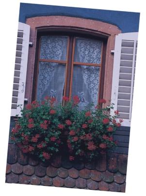 window-fix